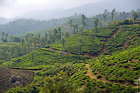 The Mystic Highlands of Kerala, South India