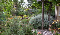 Judy Adler sustainable backyard garden with summer-dry, drought tolerant shrubs and cistern for water storage and irrigation;, Walnut Creek, California