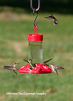 01162-12817 Ruby-throated Hummingbirds (Archilochus colubris) at Dr. JB's Hummingbird Feeder, Marion County, IL