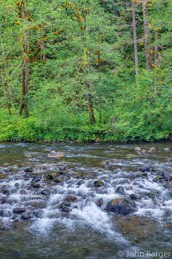 ORCAN_D200 - USA, Oregon, Mount Hood National Forest, Salmon-Huckleberry Wilderness, Spring flora and section of rapids on the Salmon River - a federally designated Wild and Scenic River.