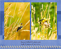 September 2011 Birds of a Feather Calendar