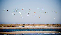 Seagulls swarm a sandbar in front of MAsonboro Island.