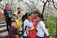 Touristes dans les vergers. Le week-end, Hanyuan connaît une grande influence touristique et les vergers sont visités par des milliers de personnes.///Hanyuan, Sichuan. Tourists in the orchards. On weekends, Hanyuan sees a big influx of tourists and the orchards are visited by thousands of people.