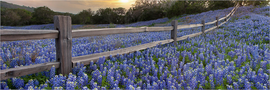 Taken along State Highway 29 outside Llano, Texas, this wood rail fence is often surrounded by Texas Bluebonnets each spring when the Texas Wildflowers are in bloom.
