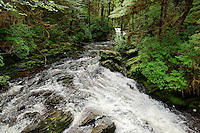 Mountain stream, Revillagigedo Island, Ketchikan, Alaska, USA