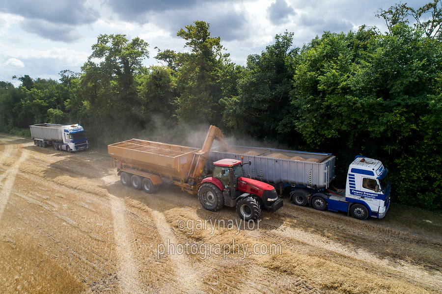 Laoding lorry on farm raodway with chaser bin- Cambridgeshire, August