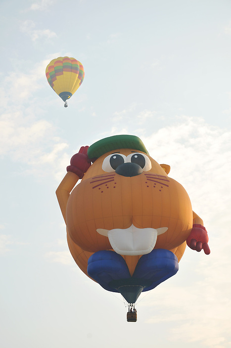 One of the more imaginative shapes I've seen for a Hot Air Balloon, the Beaver Balloon is a real crowd pleaser.