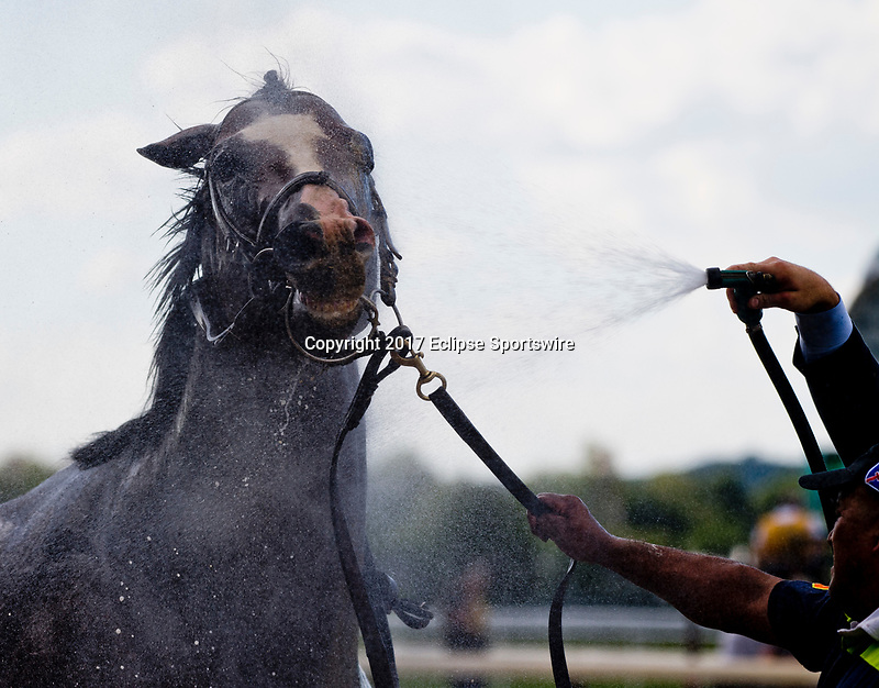 ELMONT, NY - JUNE 09: A horse gets watered down after the True North Stakes during Friday racing at the Belmont Stakes Racing Festival at Belmont Park on June 9, 2017 in Elmont, New York (Photo by Scott Serio/Eclipse Sportswire/Getty Images)