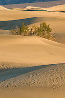 Lone mesquite bush in thesand dunes of Death Valley National Park