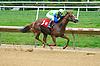 Visionary Wonder winning at Delaware Park on 9/30/15