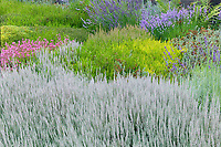 Vashon-Maury Island, WA: Summer perennial garden featuring a combination of different heathers and lavenders