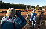 Ackerson Meadow off Evergreen Road near Yosemite National Park, August 14, 2010..Erickson Cattle Co. Cowboy Workshop 2010.  .Workshop attendee hugs fence line in Ackerson Meadow to get images of cowboys working cattle.  Erickson Cattle Company Photography Workshop..Photo by Al Golub/Golub Photography