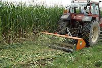 - Destruction of  corn fields in which  have been found percentages of OGM  (genetically modified) seeds....- Distruzione di campi di mais in cui sono state trovate percentuali di sementi OGM (geneticamente modificate)