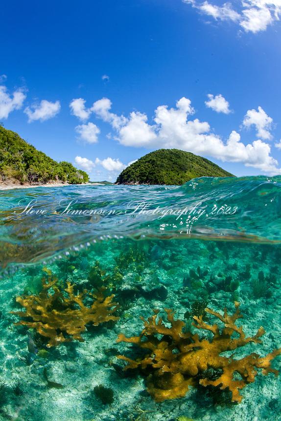 Split level reef<br /> Whistling Cay<br /> St. John<br /> Virgin Islands