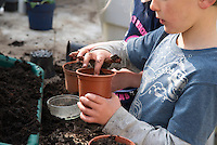 A six year old boy working in a greenhouse and planting seeds, Chipping, Lancashire.
