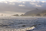 Bird Rocks covered in mist