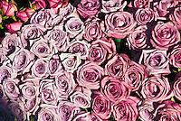 Rose s