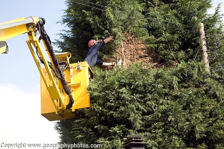 Tree surgery using cherry picker crane, Shottisham, Suffolk, England