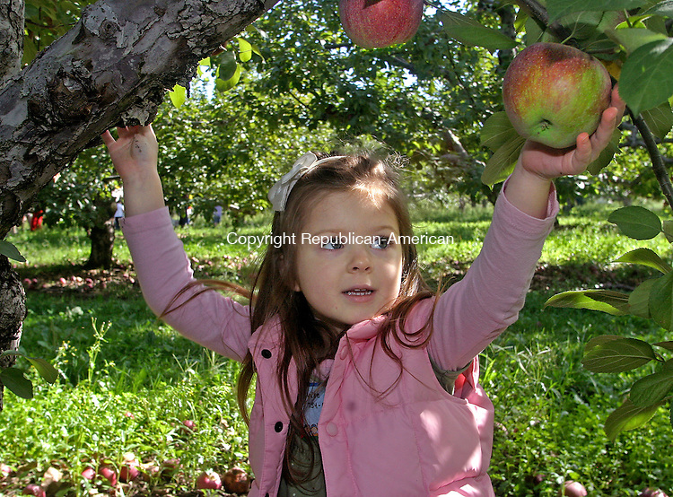 SOUTHBURY, CT.-23 SEPTEMBER 2009-092509DA01- We Care kindergarden student Lauren DeLorenzo, 4, picks macoun apples during a field trip to Rogers Orchard in Southington Friday. The orchard offers pick your own apples Friday, Saturday and Sundays until the end of October.<br /> Republican-American Darlene Douty