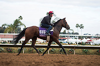 DEL MAR, CA - NOVEMBER 02: Washington DC, owned by Mrs. John Magnier, Michael Tabor & Derrick Smith and trained by Aidan P. O'Brien, exercises in preparation for Breeders' Cup Turf Sprint at Del Mar Thoroughbred Club on November 2, 2017 in Del Mar, California. (Photo by Jamey Price/Eclipse Sportswire/Breeders Cup)