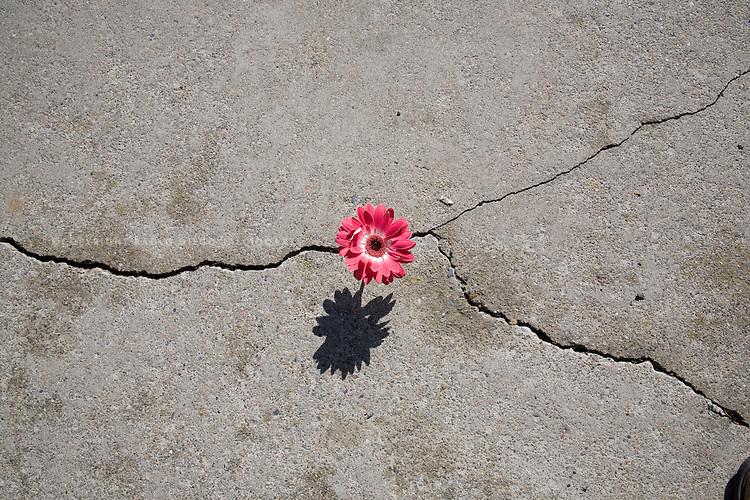 flower struggles to survive alone in the concrete jungle