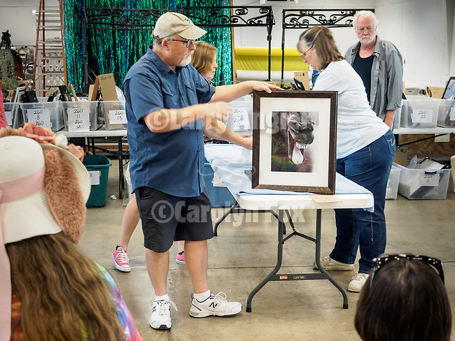 Judging of the Professional Photography entries at the 79th Amador County Fair, Plymouth, Calif.<br /> <br /> Judge Randy Allen.<br /> <br /> A hat's off to Leslie and David Schupp and their great crew of volunteers who take it all in, set-up for the judging then in a short time, hang nearly 400 entries for everyone to enjoy!<br /> <br /> #DavidSchupp, #LeslieSchupp, #AmadorCountyFair, #TourAmador, #VisitAmador, #Photography, #AmadorCountysPhotographers