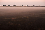 Mist over floodplain, Busanga Plains, Kafue National Park, Zambia