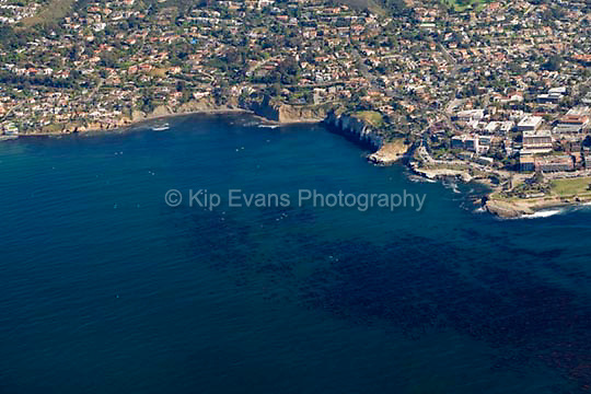 Aerial view of La Jolla, looking east/southeast, showing a productive kelp forest in the foreground.