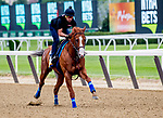 ELMONT, NY - JUNE 07: Justify gallops as horses prepare Thursday for the 150th running of the Belmont Stakes at Belmont Park on June 7, 2018 in Elmont, New York. (Photo by Scott Serio/Eclipse Sportswire/Getty Images)