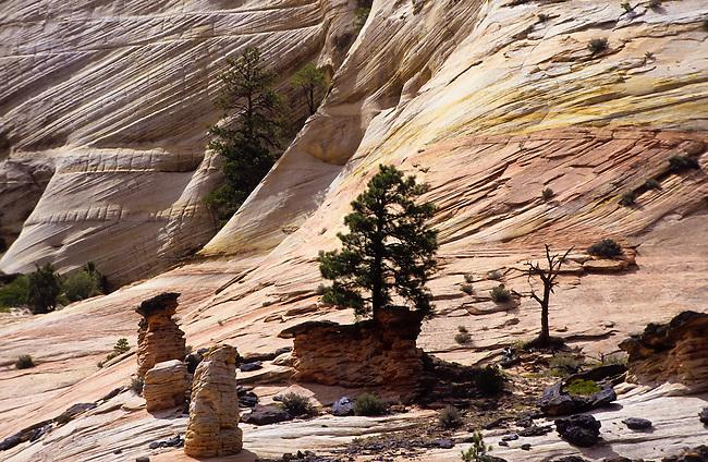 Checkerboard Mesa  in Zion National Park, Utah, USA
