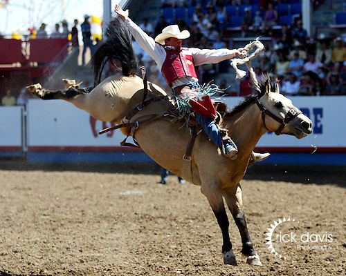 PRCA cowboy Cody Wright scored big with an 87 point ride on the Buetler & Son Rodeo Company bronc Tom Dooley during the Cowboy Christmas run July 29, 2008 at the Greeley Independence Stampede Rodeo in Greeley, Colorado.