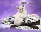 Xavier, ANIMALS, cats, photos, SPCHCATS698,#A# Katzen, gatos