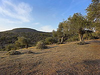 OR_LOCATION_45162