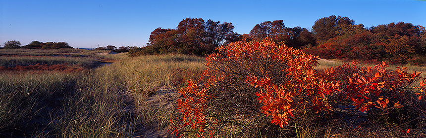 Autumn beach plum leaves color the sand dunes and salt marsh  near Seabrook, New Hampshire.  Photograph by Peter E, Randall