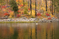 During the fall months, the trees and other flora along the Wenatchee River in Tumwater Canyon turn red and yellow offering beautiful view.