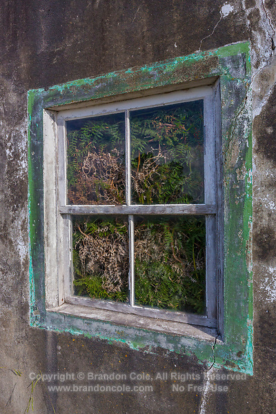 WQ50169-D. Looking through a window at ferns growing inside an abandoned building. Pico Island, Azores, Portugal.<br /> Photo Copyright © Brandon Cole. All rights reserved worldwide.  www.brandoncole.com