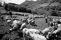 "ROMANIA / Maramures / Glod / May 2003..Shepherds at a Measurement of the Milk Festival which occurs in each village every year in early May. The men, who oversee villagers' flocks during the summer in the high pastures, bring the sheep to meet their owners where the ""measurement"" takes place. The amount each family's animals yield, determines the quota of cheese they will receive during the season. The flock is then blessed by the village priest and drinking and feasting follows...© Davin Ellicson / Anzenberger"