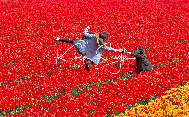 LISSE -  Veel toeristen wagen zich tussen de bloemen wat door veel kwekers niet in dank wordt afgenomen.