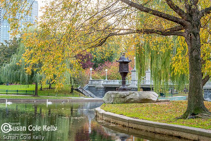 Swans at the pond in the Boston Public Garden, Boston, Massachusetts, USA