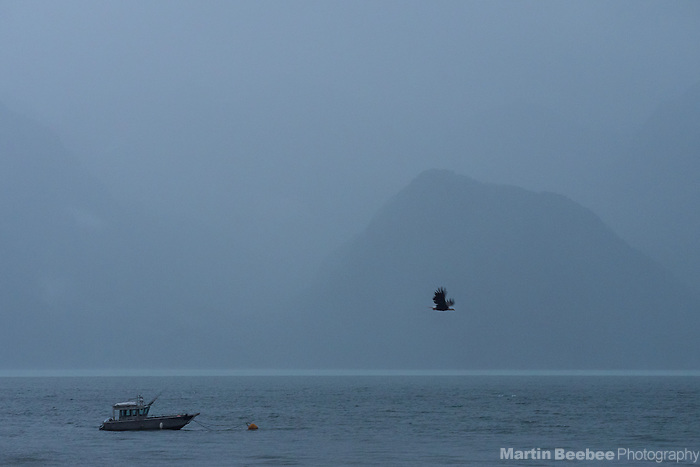 Bald Eagle and fishing boat on Resurrection Bay, Seward, Alaska
