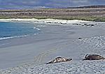 Sealions enjoying the beach at Gardiner Bay, Isle Espanola;  Galapagos Islands,
