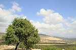 Israel, Lower Galilee, a view north of Bet Keshet forest