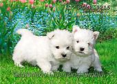 Marek, ANIMALS, REALISTISCHE TIERE, ANIMALES REALISTICOS, dogs, photos+++++,PLMP3215,#a#, EVERYDAY