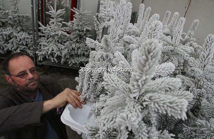 Foto: VidiPhoto..BEMMEL - Topdrukte donderdag bij VON Bloemenveiling Oost-Nederland in Bemmel. De veiling probeert te voldoen aan de nieuwe Kersttrends bij de consument en kwekers spelen daar handig op in. Zo zijn gewaxte kerstbomen en geverfde bloemen (zoals gipskruid) enorm populair op dit moment. Behalve dat het product daarmee langer houdbaar is, wordt het daarmee ook prijstechnisch interessant voor de kweker. Goedkope soorten worden zo een stuk duurder. Foto: Gewaxte kerststukjes en kerstbomen.