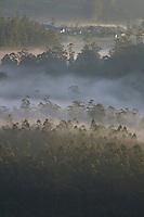 "Sunrise over the Mountains and valley's at ""World's End"" Nuwara Eliya, Sri Lanka"