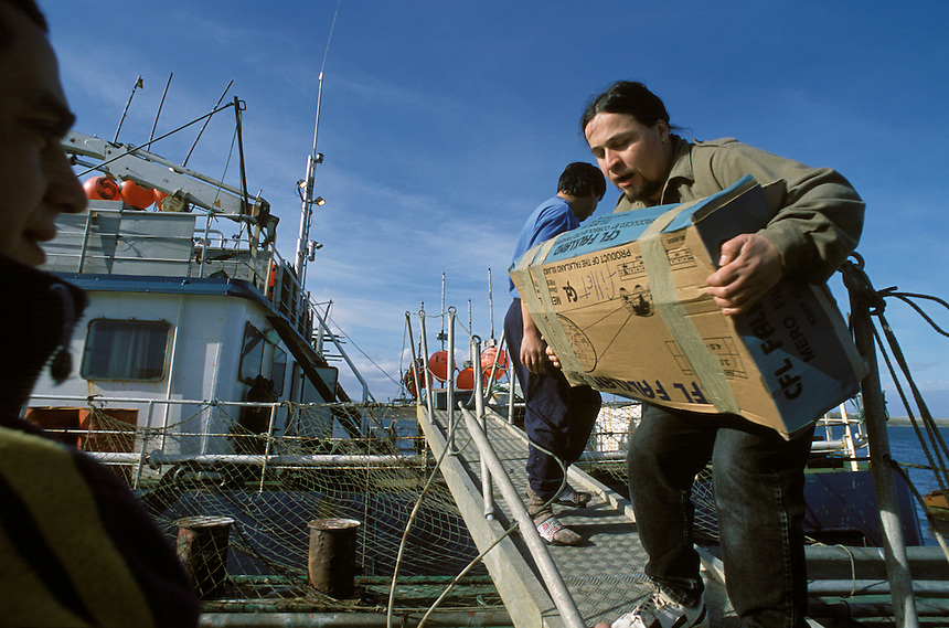 Chilean and Brazilian crew members aboard a Falklands-owned trawler unload frozen hake bin Port Stanley. Not only an effort at resource conservation, the zone is also a business enterprise for the2,500 islanders. Sixty percent of the colony's $30 million annual budget comes from licenses to fish Falkland waters.