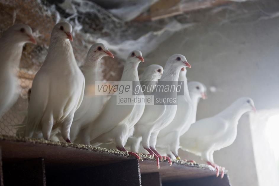 Europe/France/Midi-Pyrénées/24/Dordogne: Peyrillac et Millac: Chez Mr Michel Pribilsqui éleveur de pigeons