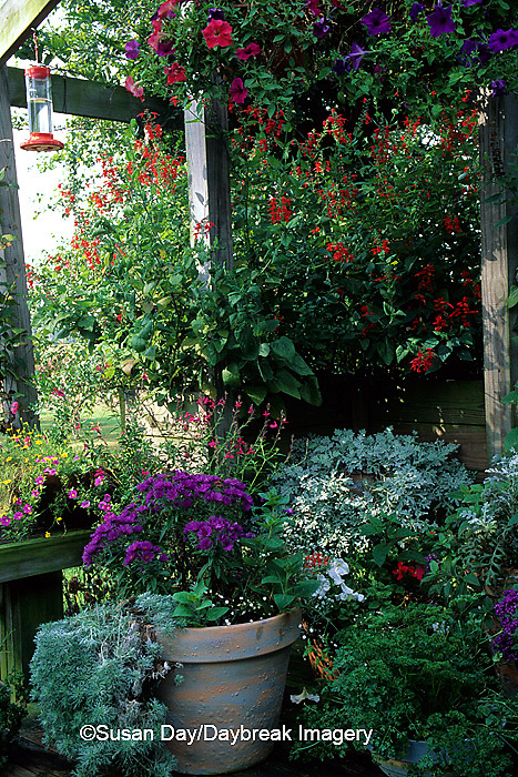 63821-04506 Salvias, Asters, Petunias, Artemisias, & Baby's Breath butterfly/ hummingbird garden on deck   IL