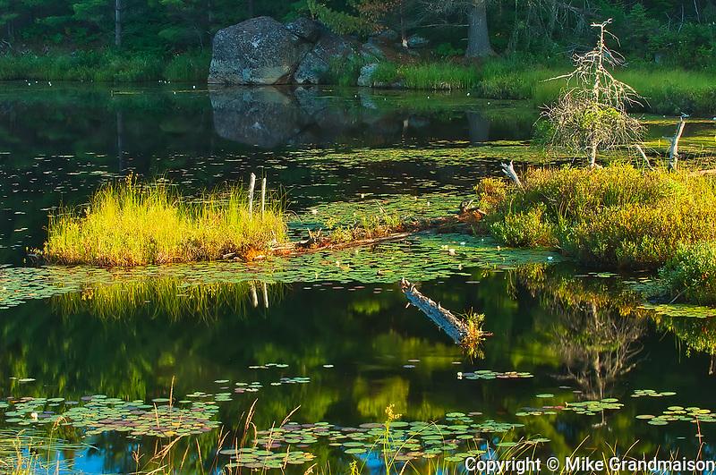 Lake Opeongo wetland<br />Algonquin Provincial Park<br />Ontario<br />Canada