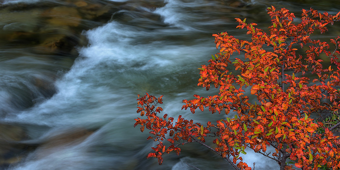Fall color punctuates an intimate scene in Argentina after a heavy rain.